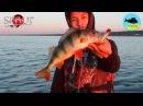 Ловля окуня на поппер SPRUT HIKARI POP 3D и AJI POP Kamfish