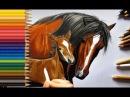Colored Pencil Drawing Horse with Baby Jasmina Susak