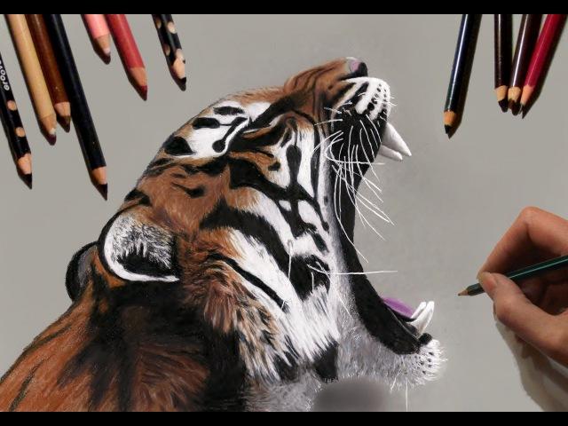 Speed Drawing: Tiger   Jasmina Susak