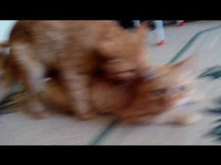 Коты Геи:D