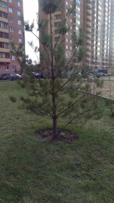 Зима 2015-2016 в Балашихе
