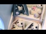 Наконец-то приехала наша звёздочка⭐ от Алёны @piglette_toy 🐰 Назвать этих заек просто игрушками я не могу - настолько много души и творчества вложено в создание каждой из них... У каждой свой образ, свой характер. Поэтому мы с Мару называем