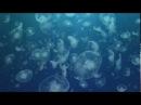 Чудища морей Доисторическое приключение