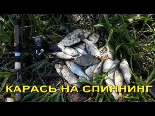 КАРАСЬ И ПЛОТВА НА СПИННИНГ, МОРМЫШИНГ РУЛИТ