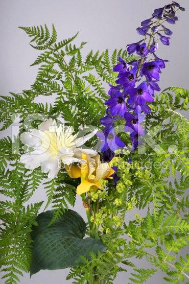 Аконит - многолетнее растение