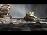 BBC Прогулки с монстрами. Жизнь до динозавров (Walking With Monsters. Life Before Dinosaurs). 2005