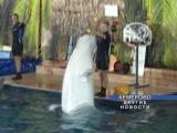 Открытие дельфинария в Кемерово