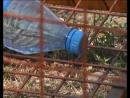 В Тогуре появились контейнеры для сбора пластиковой тары и полиэтиленовых пакетов