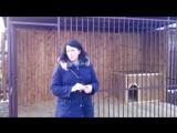 Видео отзыв от Марины, Шлиссельбург