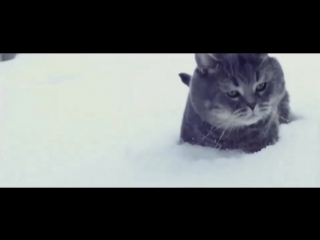 Полет Кота В Снег   Fat Cat Fly