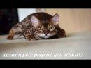 мъэмы номер 6про кошек смешные