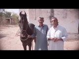 MARWARI War Horse of the Maharaja for the EQUUS INTERNATIONAL FILM FESTIVAL