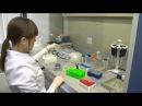 Знакомство с методами выделения геномной ДНК Genomic DNA Isolation techniques overview