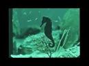 Nirvana - Rape Me (Official Music Video)