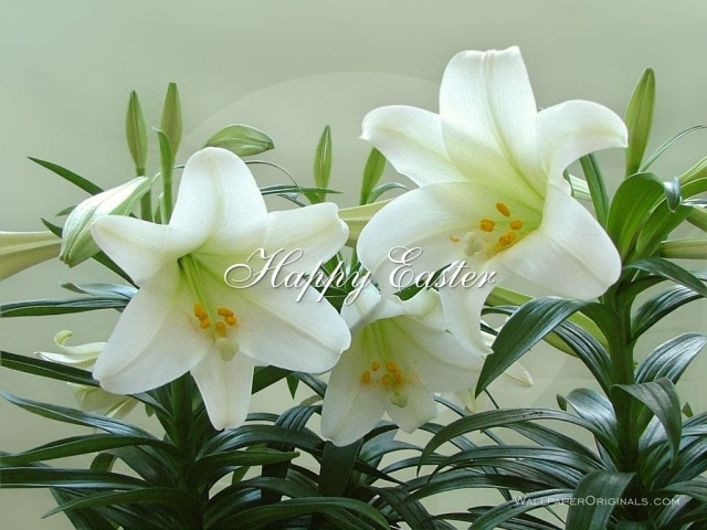 Happy Easter - music ** Serenade deToselli ** played by Richard Abel