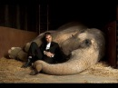 Воды слонам Water for Elephants 2011