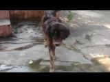 Дженни - собака-чудо!