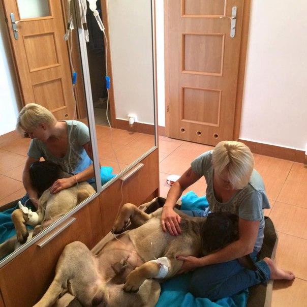 Кастрация и стерилизация собак. Её последствия ZARr0DW1ztM