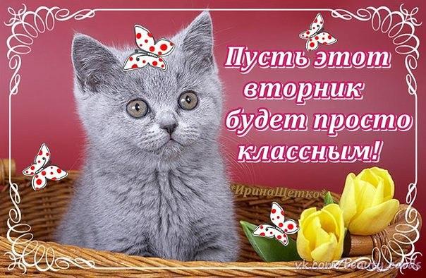 https://pp.vk.me/c630821/v630821488/c4d1/qORzCE_6oDI.jpg