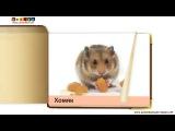 Развивающее видео КАРТОЧКИ ДОМАНА Домашние животные и птицы