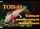ТОП 10 Самые необычные животные в мире. Интересные факты