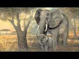 Saint Saens Carnival of the Animals~L'Elephant (The Elephant)