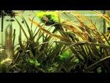 Aquascaping - Planted aquarium 60x30x35