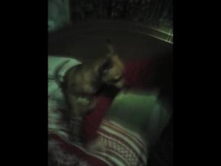 моя собака трахает руку девочки !!!