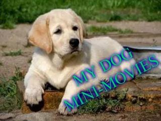Мини-фильм про мою собаку