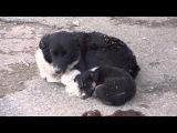 Спасение животных Осторожно видео может довести до слез