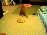Gato Asustado por plátanos (Scared Cat by Bananas)