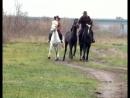Клип на песню  о лошадях!