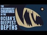 Загадочные существа самых глубоких глубин океана