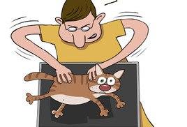 Кот протирает монитор
