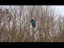 Kids Gone Wild: Denmark's Forest Kindergartens