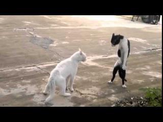Кот с гоблинской осанкой наезжает на котa обыкновенного Прикол Животные Кошки(животные)(коты)