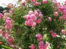 Лей де Роз Королевство Роз в предместье Парижа