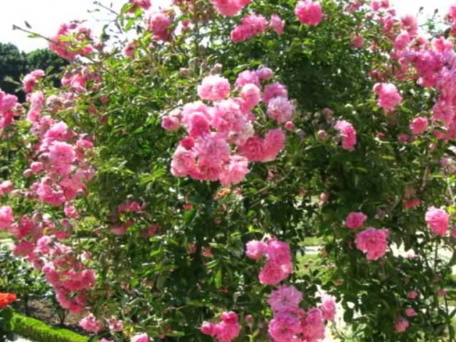 Лей-де-Роз - Королевство Роз в предместье Парижа