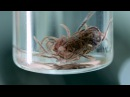 New Discovery Blood-Red Worms That Thrive in a Toxic Cave EXCLUSIVE VIDEO National Geographic