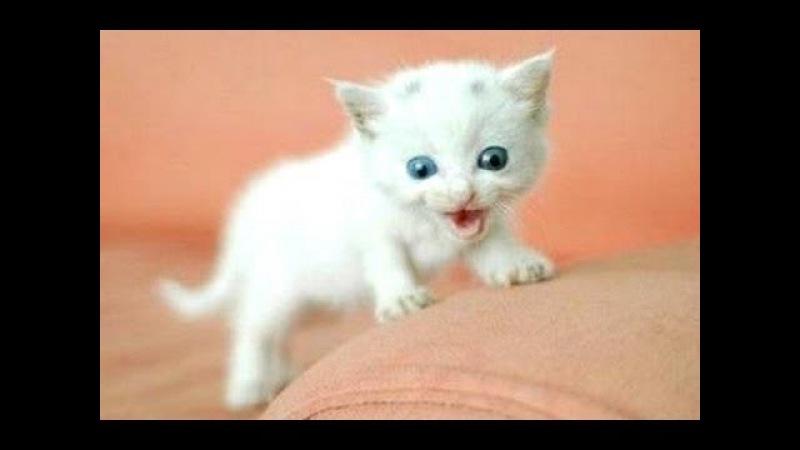 Забавные кошки и котята мяуканье Сборник - 2016 NEW