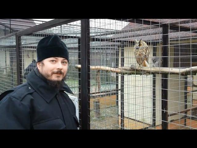 В парке птиц Воробьи
