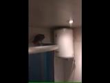 Случайно залетевший в квартиру попугай шокировал хозяев