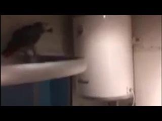 Случайно залетевший в квартиру попугай обматерил хозяев