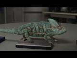 Забавный хамелеон меняет цвет