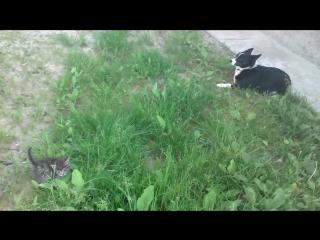 спасене кошеня на прилаштування 7