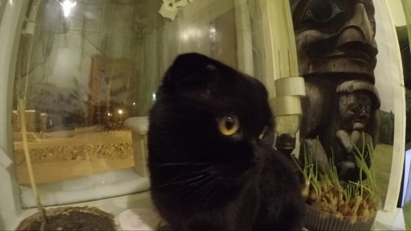 Самый умный кот Леопольд перемена в жизни этого кота мы подобрали с улицы и поменяли ход событий в его жизни(у него жизнь была