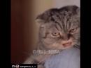 Кот ебать колотить