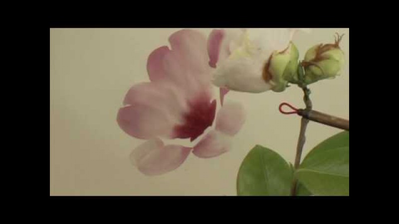 Chinese Painting Lesson Camellia 6