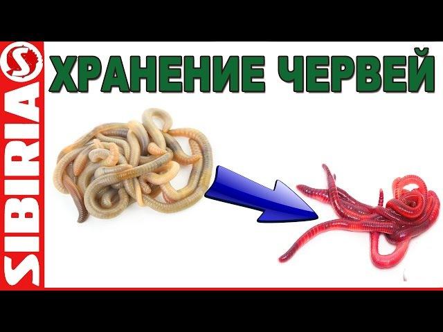 Хранение червей. Красный ЧЕРВЬ - это ПРОСТО, хранение опарыша
