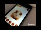 24video homyak na ayfone video